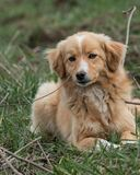 Cute stray dog is relaxing on a sunny day royalty free stock photos
