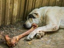 Cute stray dog sleeps Stock Photo