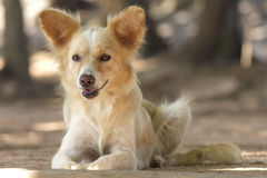 Cute stray dog - Stock Image Stock Image