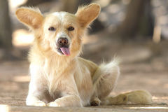 Cute stray dog - Stock Image Royalty Free Stock Photography