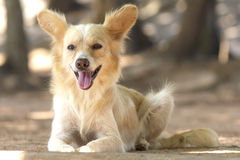 Cute stray dog - Stock Image Royalty Free Stock Images
