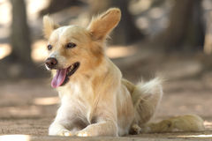 Cute stray dog - Stock Image Stock Photo