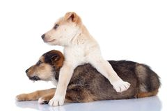 Cute stray puppies looking to a side Stock Images