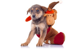 Cute stray puppy Stock Photo