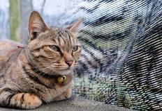 Cute street cat closeup view. Cute street cat rest on stone platform royalty free stock photos