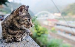 Cute street cat closeup view. Cute street cat rest on stone platform royalty free stock photography