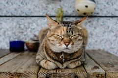 Cute street cat closeup view. Cute street cat sleeping on the table stock photos