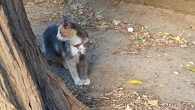 Cute  street cat looking at the camera. Cute street cat looking at the camera stock video