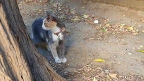 Cute  street cat looking at the camera stock video