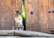 Cute street cat. Sitting at the doorway stock photo