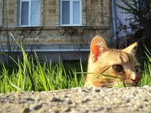 Cute street cats on the fence Stock Photo
