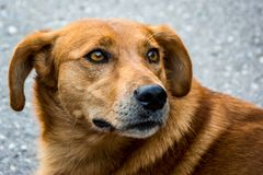 Cute street dog, canis lupus familiaris royalty free stock image