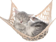 Cute striated kitten sleep in hammock Stock Photos