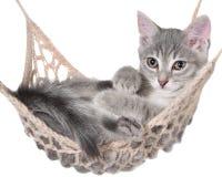 Cute striated kitten sleeping in hammock Royalty Free Stock Images