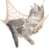 Cute striated kitten sleeping in hammock Stock Image