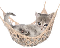Cute striated kitten sleeping in hammock Stock Photography