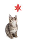 Cute Striped Kitten Playing with a Christmas Ornament on White Royalty Free Stock Photo