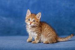 Cute striped kitten Stock Image