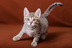Cute striped kitten Stock Photo