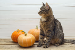 Cute stripes cat and pumpkin on a wooden table on a background o Stock Photo
