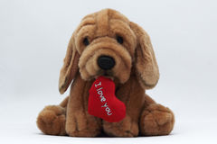 Cute Stuffed Dog with Heart and I Love You Text Stock Image