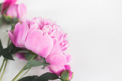 Cute and stylish branding mockup photo with peonies. royalty free stock photography