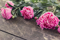 Cute and stylish branding mockup photo wit peonies. royalty free stock photos