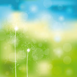 Cute summer background Royalty Free Stock Photography
