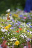 Cute summer bouquet Royalty Free Stock Photo