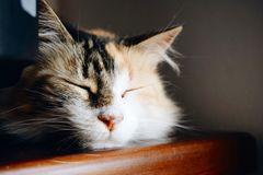 Cute Summer. I took photo of my cat when she was sleeping, she´s so cute stock image
