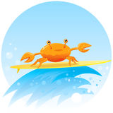 Cute surfing crab Stock Photos