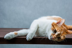 Cute, sweet cat in home Royalty Free Stock Images