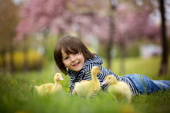 Cute sweet child, boy, playing in the park with ducklings Stock Photography