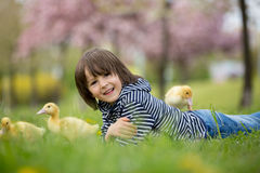 Cute sweet child, boy, playing in the park with ducklings Stock Images