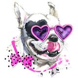 Cute sweet dog T-shirt graphics. Funny dog illustration with splash watercolor textured background. stock illustration