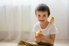 Cute sweet little child, preschool boy, playing with little chic Royalty Free Stock Image