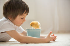 Cute sweet little child, preschool boy, playing with little chic Royalty Free Stock Photography