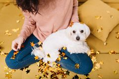Cute, sweet little white dog looking to camera on knees young woman chilling in golden tinsels on coach. Home comfort. Pets, cheerful mood stock images