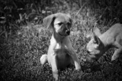 Cute sweet puppies play on the grass royalty free stock photos