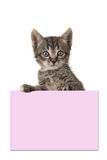 Cute tabby baby cat holding a pink paper board Stock Photos