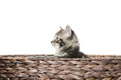 Cute tabby in boat Stock Image