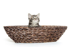 Cute tabby in boat Royalty Free Stock Photos