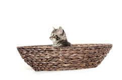 Cute tabby in boat Stock Photography