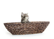 Cute tabby in boat Stock Photos