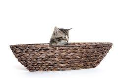 Cute tabby in boat Stock Photos