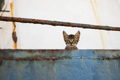 Cute Tabby Cat on Abandoned Old Ship. Cute Tabby Cat on Abandoned Old Rusty Ship Royalty Free Stock Photography