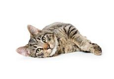 Cute tabby cat Royalty Free Stock Photography
