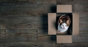 Cute tabby cat in a cardboard box looking up to the camera. Panoramic picture with copy space stock photography