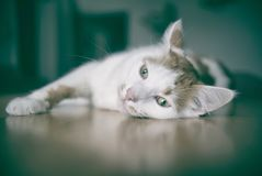 Cute tabby cat is daydreaming. Cute tabby cat is lying on the table and daydreaming with open eyes Stock Image
