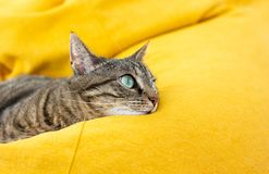 Cute tabby cat with green eyes lies on yellow bean bag. Cute tabby cat with green eyes lies on bright yellow bean bag. Boring mood stock photo